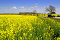 Truck On Yellow Spring Fields Road Royalty Free Stock Images - 39815139