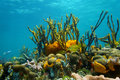 Underwater Scenery Colorful Marine Life Coral Reef Stock Images - 39823254