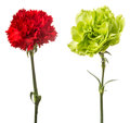 Carnation Royalty Free Stock Images - 39851899