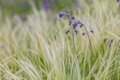 Feather Grass Stock Images - 39872684