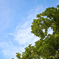 Tree And Sky Royalty Free Stock Image - 39900096