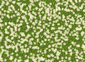 Many White Open Flowers In A Green Grass Backgrounds Stock Image - 39905751