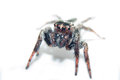 Spider. Close Up. Royalty Free Stock Photos - 39919608
