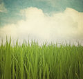 Paddy Field Royalty Free Stock Photo - 39921235