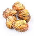 Raw Cockle I Stock Photography - 39944782