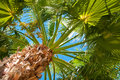 Bottom-up View Of A Beautiful Palm Stock Photography - 39945582