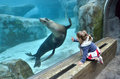 Girl Watching A Sea Lion Royalty Free Stock Photos - 39959588