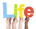 Group Of Multiethnic Hands Holding Life Royalty Free Stock Photography - 39966787
