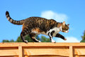 Cat Walking On Fence Stock Photography - 39972322