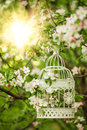 Bird Cage - Romantic Decor Stock Photos - 39983953