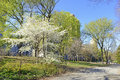 Spring In Central Park With Flowering Trees, Manhattan, New York Stock Photo - 39994400
