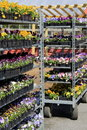 Metal Shelves Filled With Flats Of Colorful Flowers Royalty Free Stock Photography - 40004647