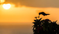 Humming Bird In The Sunset Stock Photos - 40026253
