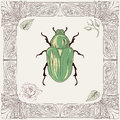 Chafer Beetle Drawing Royalty Free Stock Photo - 40056665