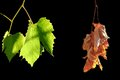 Alive And Dead Leaves Stock Photography - 40065822