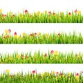 Green Grass And Beautiful Spring Flowers. EPS 10 Stock Photography - 40067482