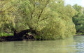 Willow Over The Water Stock Image - 40088061