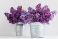 Two Bouquet Of Lilac Flowers Stock Photos - 40094893