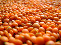 Red Lentils Stock Photography - 4010582