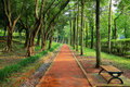 Straight Walk Path In The Park Royalty Free Stock Image - 40129846