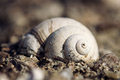 Snail Shell Stock Image - 40132831