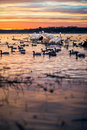White Pelicans On A Log At Sunset Stock Image - 40154041
