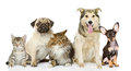 Group Of Cats And Dogs In Front. Royalty Free Stock Photo - 40167505