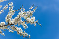 The Spring Flowering Stock Photography - 40173002