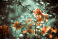 Spring Flowers Royalty Free Stock Image - 40189696