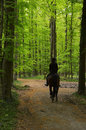 Riding Horse Through The Woods Stock Image - 40198941