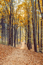 Beautiful Autumn Forest Royalty Free Stock Photography - 40207377