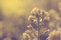 Dreamy Photo Of Amazing Wildflower Royalty Free Stock Photography - 40215187