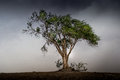 Tree Before The Storm Stock Images - 40246754