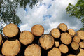 Heap Of Fresh Cut Wood Trunk In Forest Stock Photography - 40248042