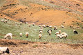 Flock Of Goats At Atlas Mountain Stock Images - 40284234