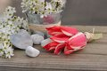Little Red Tulips Royalty Free Stock Photos - 40293688