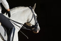 White Sport Horse With The Rider Stock Images - 40294144