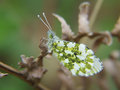 Small Butterfly Royalty Free Stock Image - 40297036