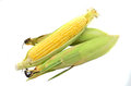 An Ear Of Corn Royalty Free Stock Photo - 40320825