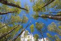 Looking Up To The Sky In Forest Stock Images - 40322364