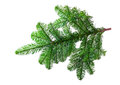 Fir Branch Isolated Royalty Free Stock Image - 40329606