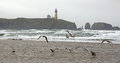 Seagulls On Beach With Yaquina Head Lighthouse Stock Images - 40331664