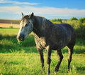 Horse On A Pasture Royalty Free Stock Image - 40346866