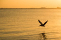 Pelican At Sunset Stock Image - 40348621
