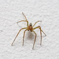 Small Spider On Wall Stock Photos - 40383023