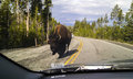 Bison On The Road Royalty Free Stock Photo - 40387735