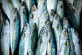 Fish Market Stock Images - 40422344