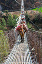 Donkey Caravan In Mountains On The Bridge,  Nepal Stock Images - 40427164