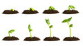 Growing Plant In Soil Stock Photo - 40455210