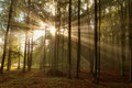Beautiful Morning Scene In The Forest With Sun Rays And Fog Stock Photo - 40465420